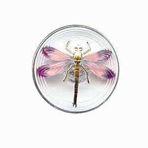 Czech Glass Buttons 07 - Dragonfly Gold Clear 31 mm